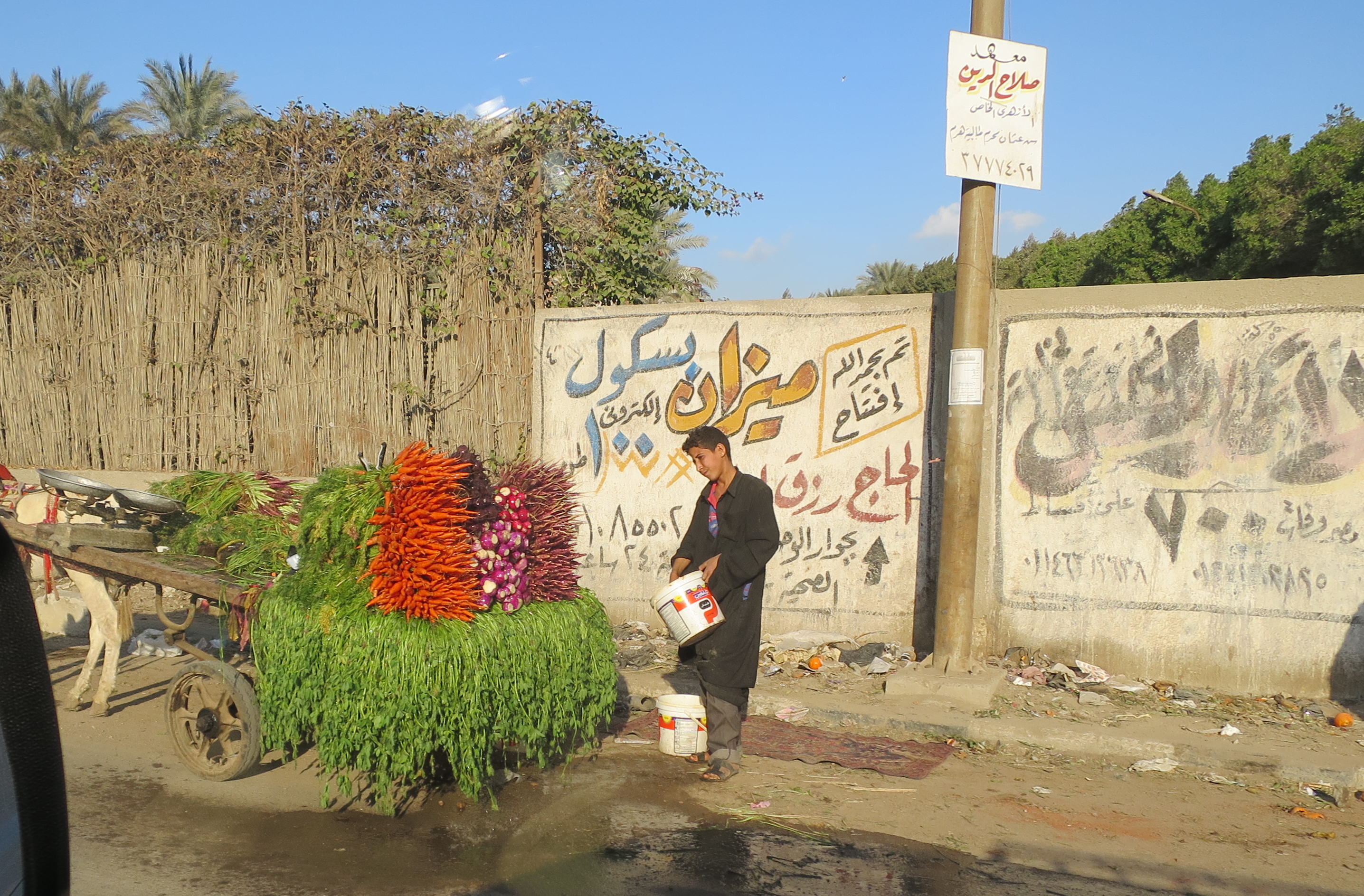 selling carrots and greens along the side of the road