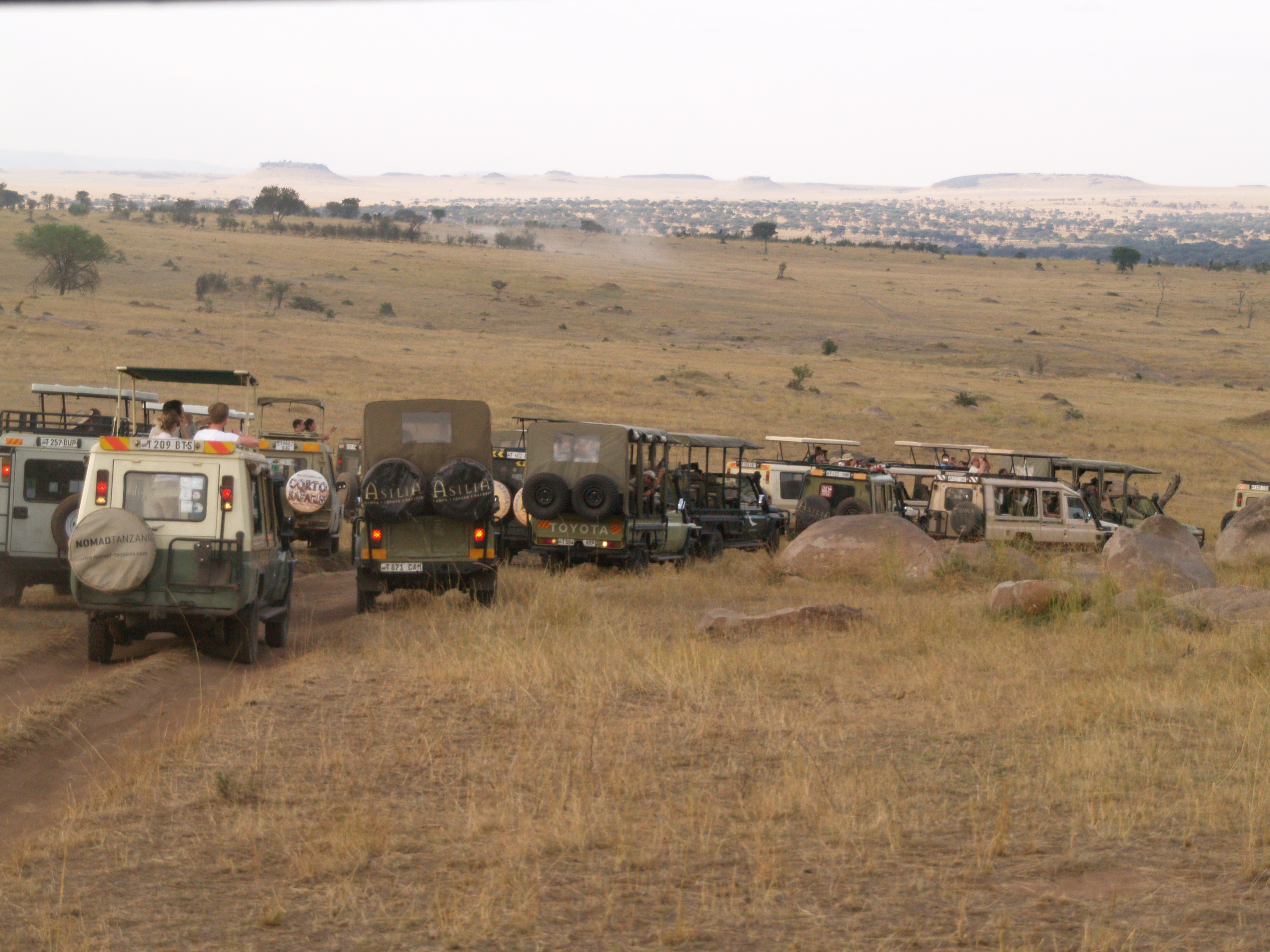 a good example of the amount of vehicles on the south side of the Mara River