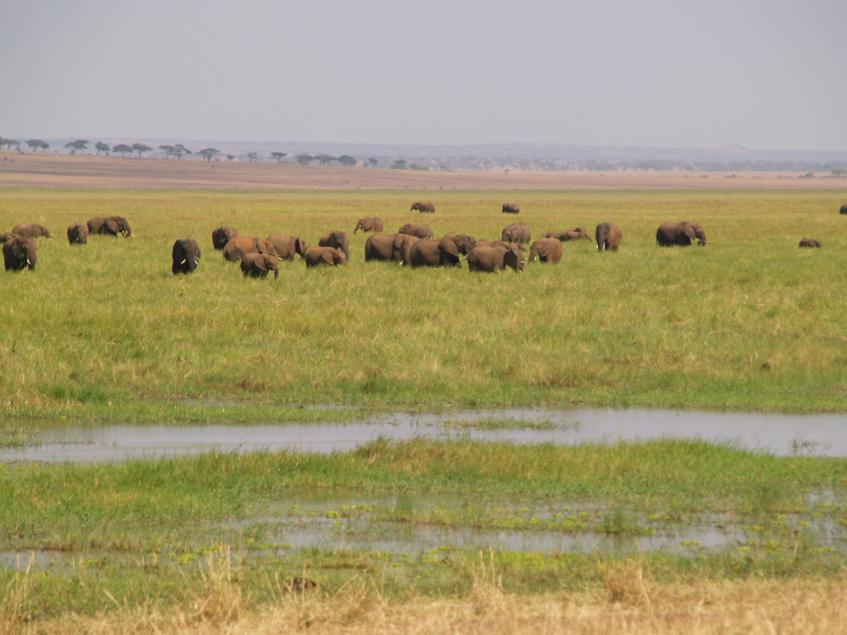 herd in the marsh