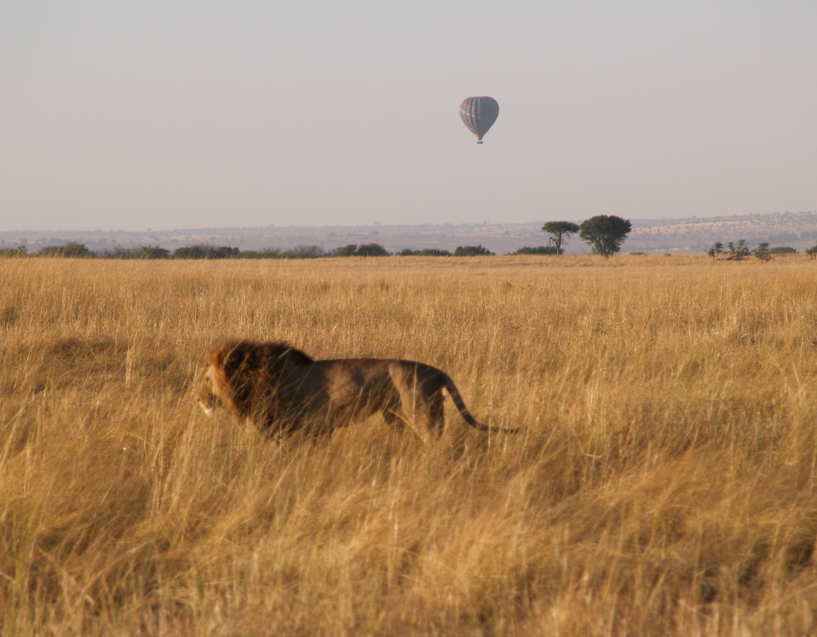 on the move, I was lucky to get this shot, on several mornings we saw several balloons going along the Mara River